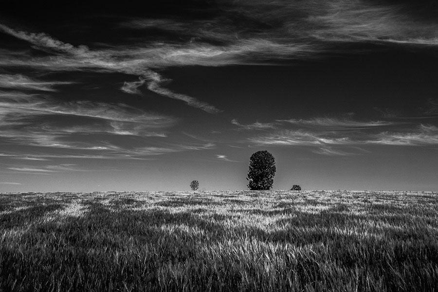 Paysage cévenol, post production noir et blanc
