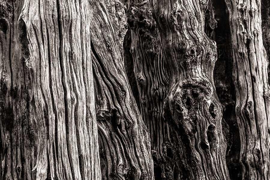 Alain_Pons_Photographe_nature_02