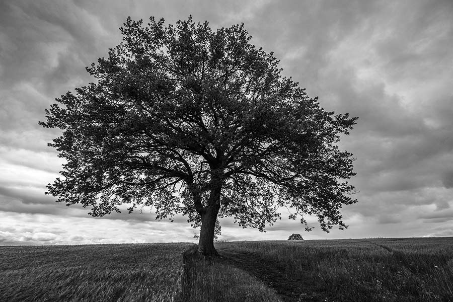 Alain_Pons_Photographe_nature_04