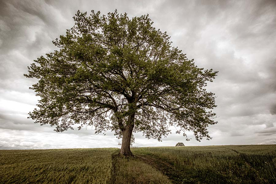 Alain_Pons_Photographe_nature_05