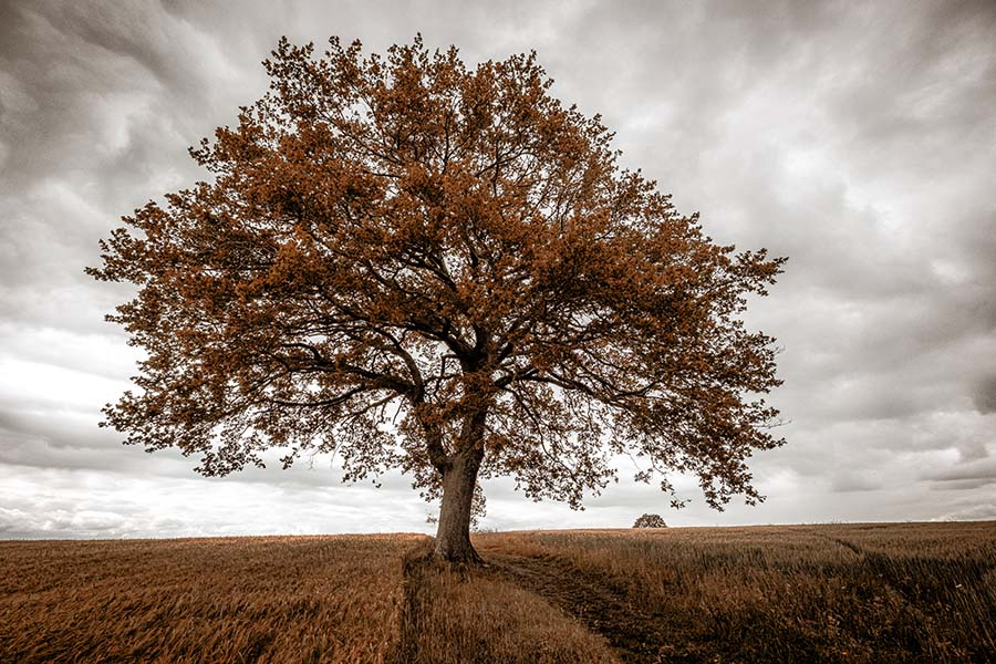Alain_Pons_Photographe_nature_06