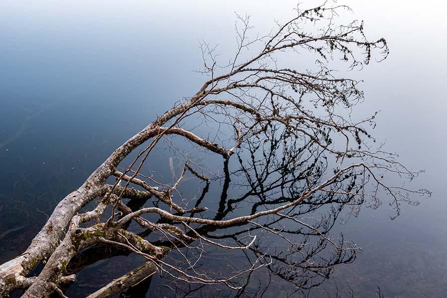 Alain_Pons_Photographe_nature_14