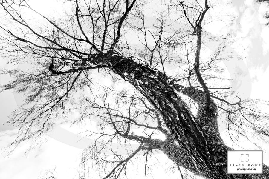 La photographie en forêt