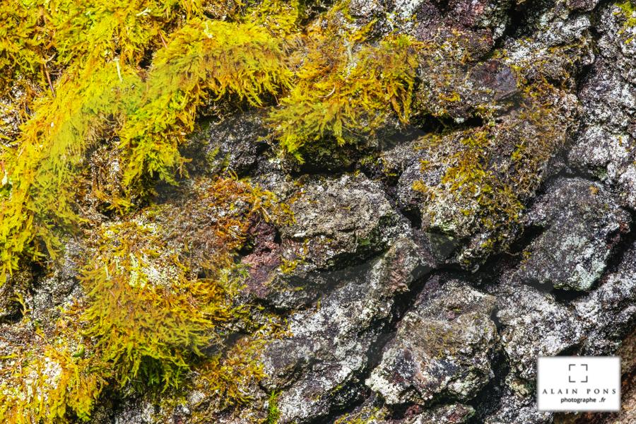 Du lichen vert sur une écorce en forme de croûte de pain de campagne