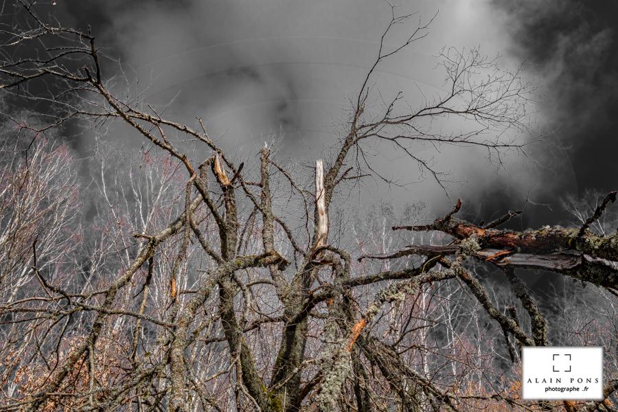 Quand le vent souffle et casse les arbres, la tempête, sans cesse renouvelée