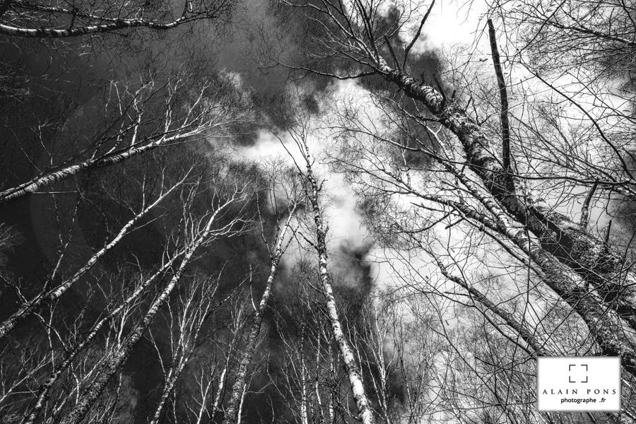 les arbres qui veulent toucher le ciel, et qui s'allongent, jour après jour, tendus vers l'infini