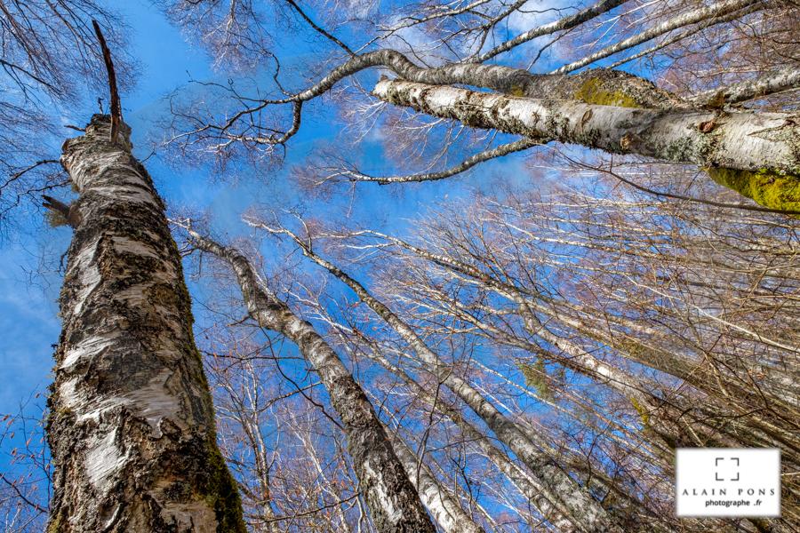 La verticalité de l'arbre, soumise aux vents, au climat, un combat permanent