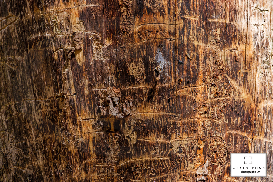 Un arbre à nu, sans son écorce, les stries de la vie, l'apparence du vécu.