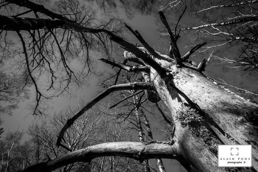 Un arbre mort, toujours debout et tendu vers l'infini
