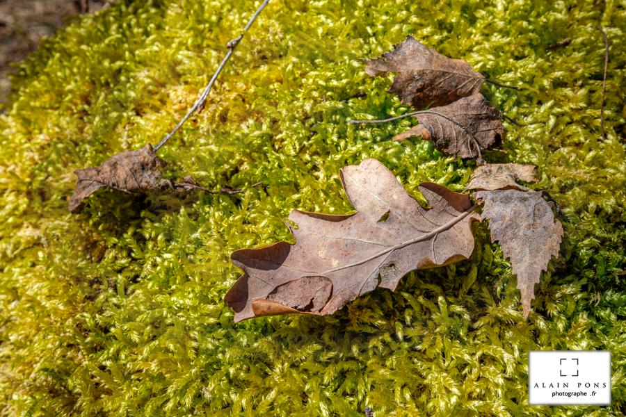 Quelques feuilles sur un joli tapis de mousse verte