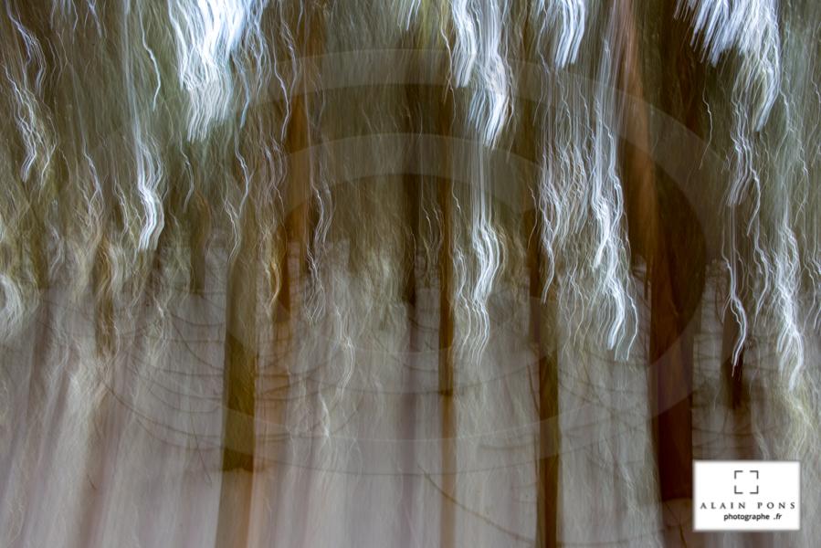 un effet volontaire de flou en forêt, pour rejoindre la peinture