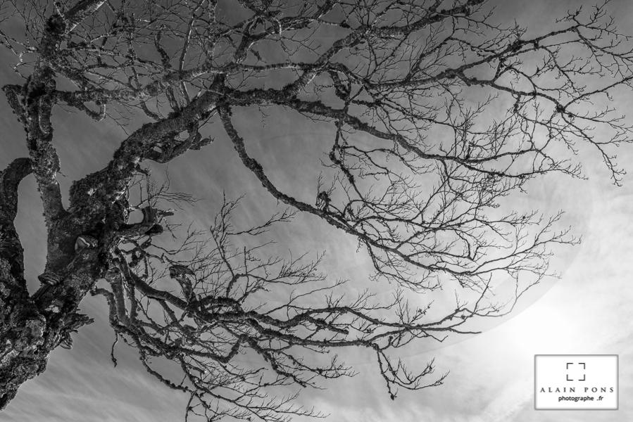 la silhouette en ombre chinoise d'un arbre en hiver sur fond de soleil lumineux