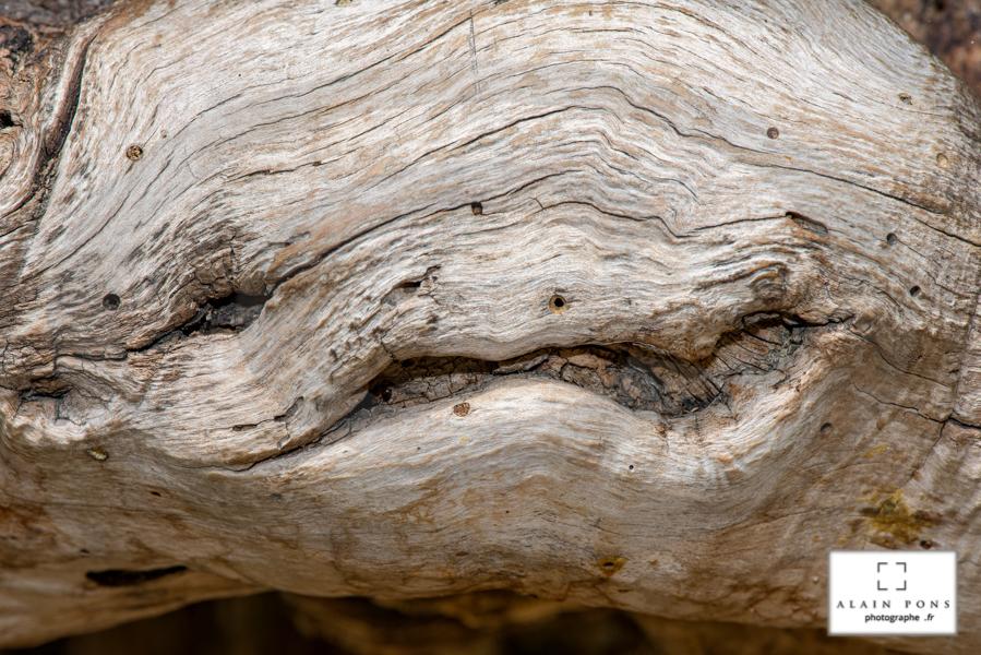 un végétal, morceau d'arbre qui fait du mimétisme avec le genre humain, une bonne tête pour n'a qu'un œil