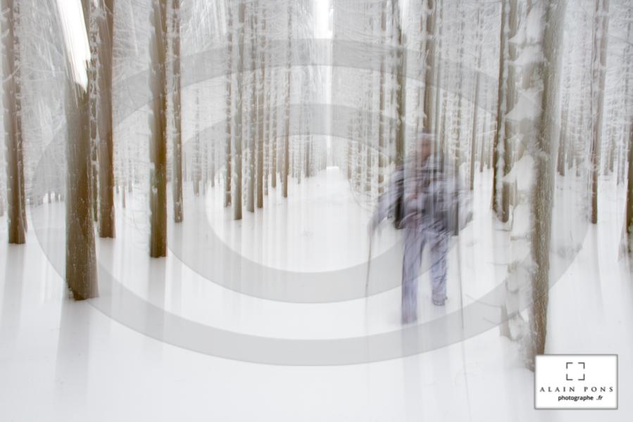 la forêt en hiver, pureté du grand blanc, seulement troublé par une silhouette fantôme